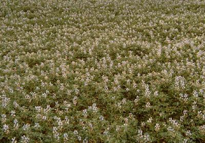 HOMEPAGE-Good-flowering-shot-4